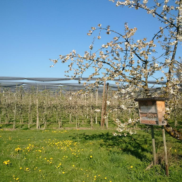 Bodensee-Stiftung Bodensee